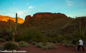 Arizona day trips/Organ Pipe Cactus