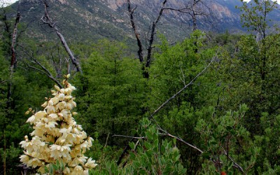 Tucson Hiking Trails - red Ridge loop