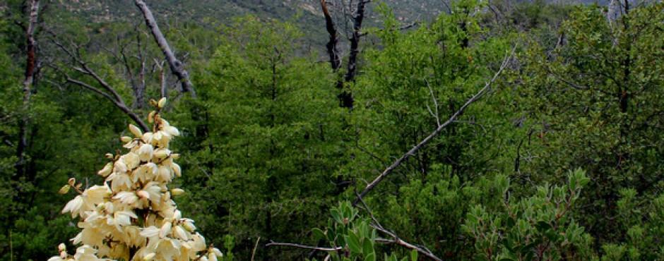 Tucson Hiking Trails - red Ridge loop