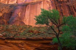 Hiking Coyote Gulch