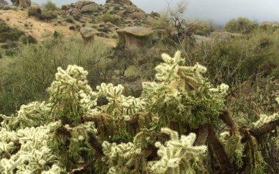 Hiking Trails in Phoenix | Copyright Clark Norton