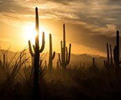 "hiking trails in tucson |Friends of Saguaro "" width="