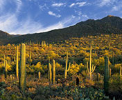 "hiking trails in tucson | sonoran desert"" width="