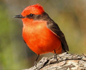 "hiking trails in tucson | Tucson audubon"" width="
